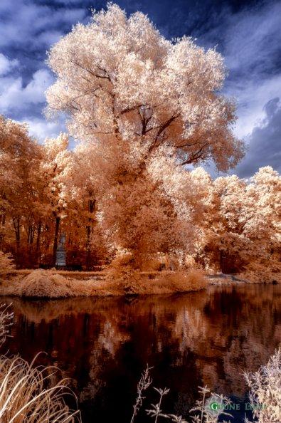 Tiergarten (Berlin) - Infrarot
