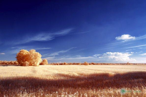 Landschaft (Zingst/Barth) - Infrarot