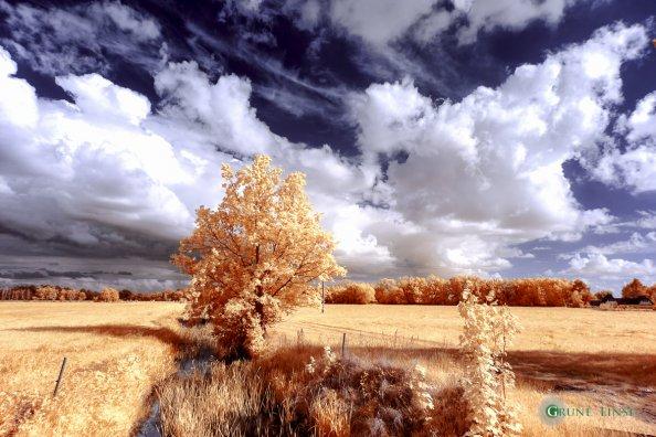 Landschaft (Zingst/Prerow) - Infrarot