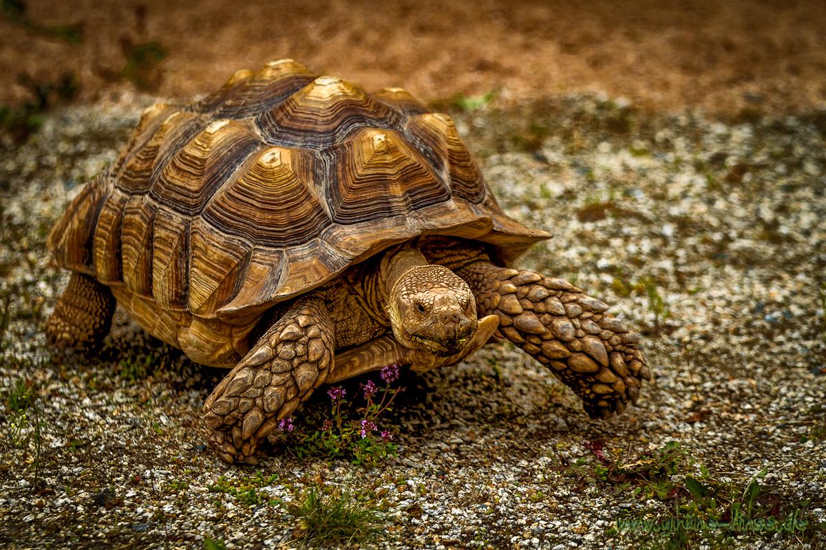 Schildkröten Forum